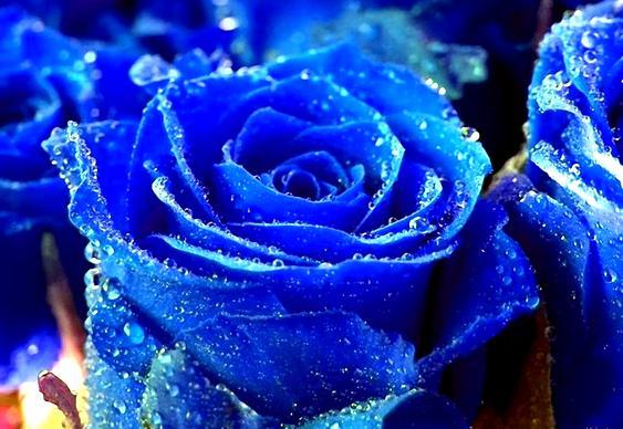 Flor Azul Viagra