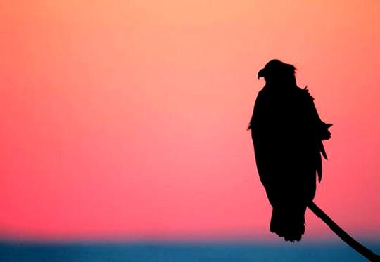 Solidão - ave solitária