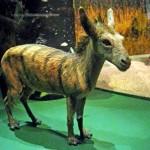 Cavalos tinham tamanho de gatos há 50 milhões de anos