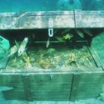 Caçador de tesouros tenta aplicar golpe do baú submerso