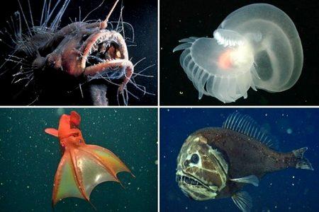 Vida marinha em fossa abissal