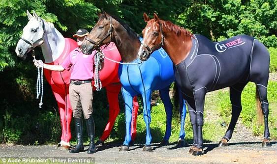 Agasalhos equinos olímpicos