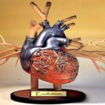 Novo coração sem batimentos cria geração de 'mortos-vivos'
