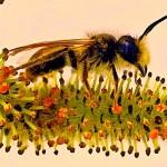 Abelhas também têm ideias abstratas, como os mamíferos