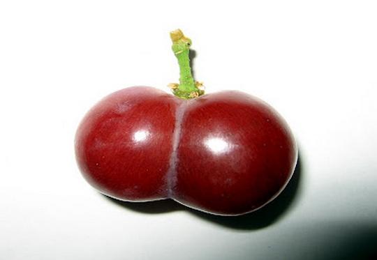 Uvas e Bundas
