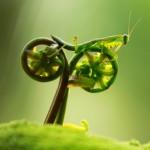 Louva-a-deus pedala bicicleta vegetal em ilusão de ótica