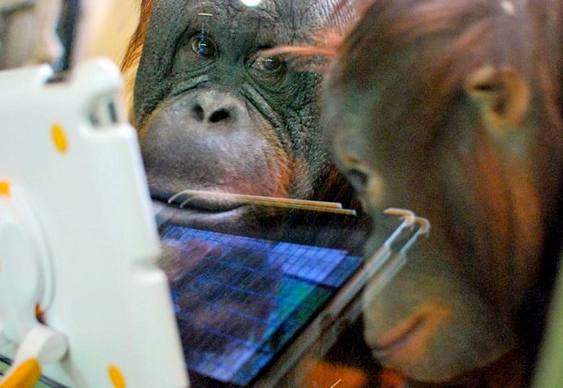Macaco com tablet