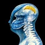 Anatomia do humor: aluno inteligente e professor com cérebro de macaco