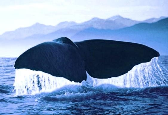 Cofre de moedas baleia