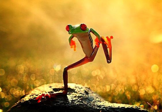 Perereca Dança