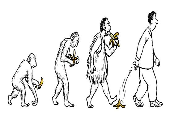 Cascas de banana na evolução humana
