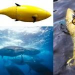 Peixe-robô com a aparência de atum vai patrulhar a costa dos EUA