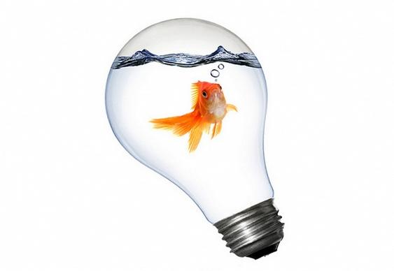 Peixe dourado dentro de lâmpada