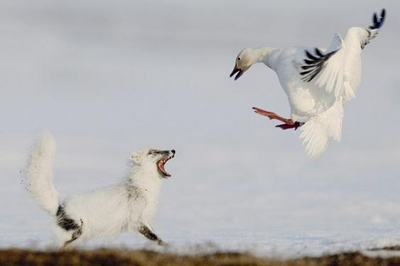 Foto sobre a vida selvagem