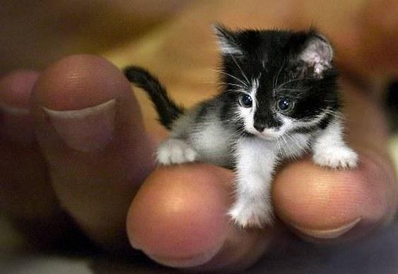 Gatinho - filhote