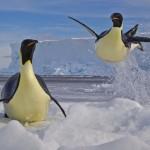 Concurso com as melhores fotos de animais e vida selvagem em 2012