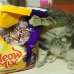 Supermercado se recusa a vender ração de gatos para idosa