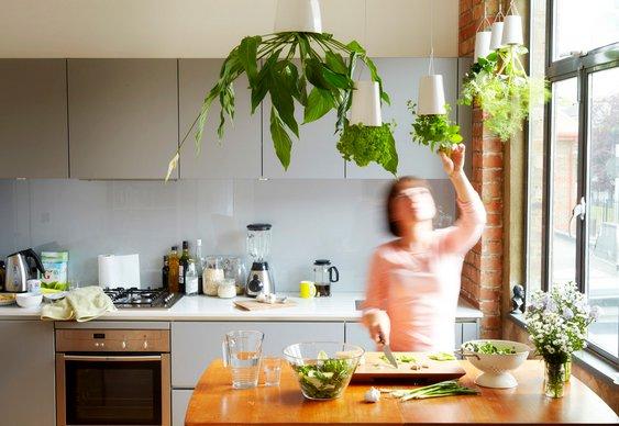 Vasos de plantas invertidos