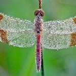 Cravejadas de água: as joias vivas forjadas pela própria Natureza