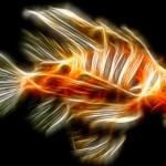 Maior parte das criaturas que habitam oceanos é desconhecida