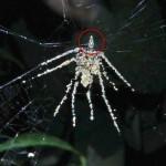 A fantasia da aranha escultora e os espantalhos da velha mídia