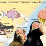 Evolução do cérebro humano ganhou impulso com arte de cozinhar