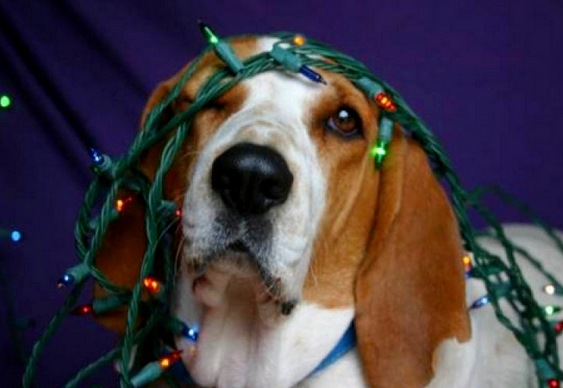 Boas Festas Cachorro