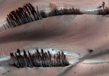 Árvores em Marte