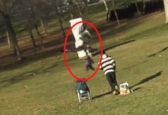 Vídeo de águia tentando levar bebê