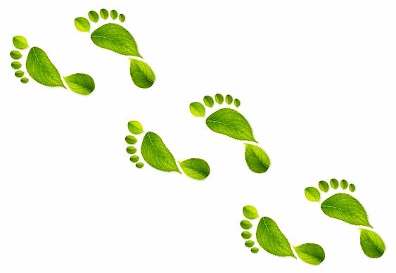 Ecologia - Pegadas