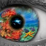 Participe de um dos melhores concursos de fotos submarinas