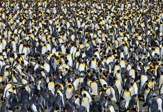 Marcha dos pinguins