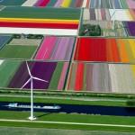 O passeio aéreo sobre as plantações de flores holandesas