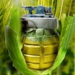 Vários países proíbem envenenamento agrícola com transgênicos