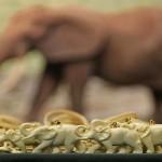 5.000 elefantes mortos em uma única reserva florestal da África