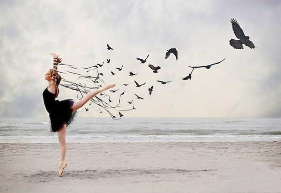 Curta-metragem A Bird Ballet