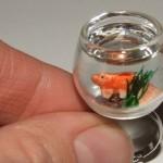 Menor aquário do mundo enfeita o topo de um anel