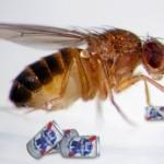 Pesticidas provocam nascimento de maior volume de machos