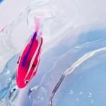 Robôs aquáticos substituem peixes ornamentais em aquários