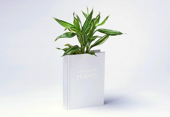Livro como vaso de flor
