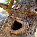 Árvores 'gritam' quando estão com 'sede' em períodos de seca