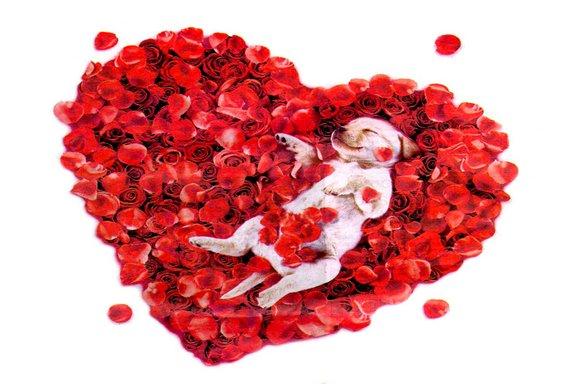 Cachorro previne doenças cardíacas