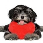 Ter animal de estimação reduz o risco de doenças do coração