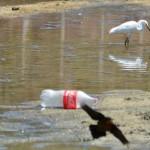 Greenpeace denuncia Coca-Cola por morte de aves marinhas
