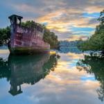 Árvores a bordo transformam navio em exuberante floresta