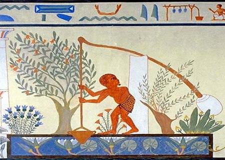 Plantação de alface