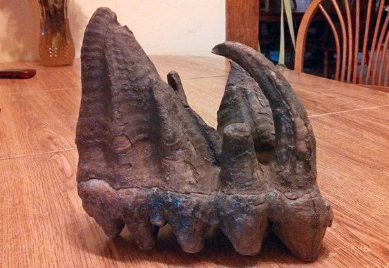 Dente achado por crianças