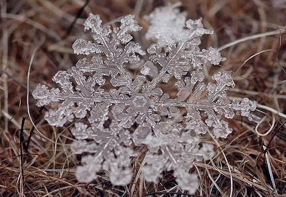 Cristal de neve
