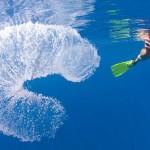 O estranho tubo gelatinoso que vaga pelos oceanos