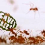 Formigas protestam com slogans em cartazes feitos de folhas